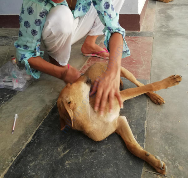 Antirabies vaccination in my town..