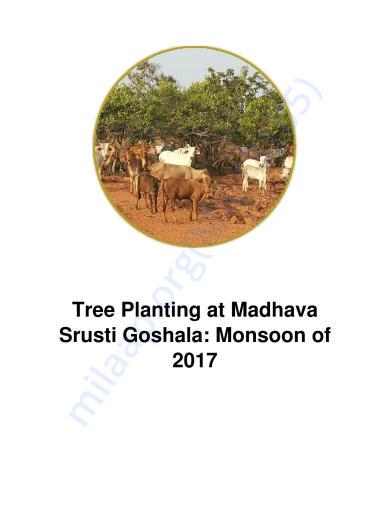 Tree Planting in rural Karnataka   Milaap