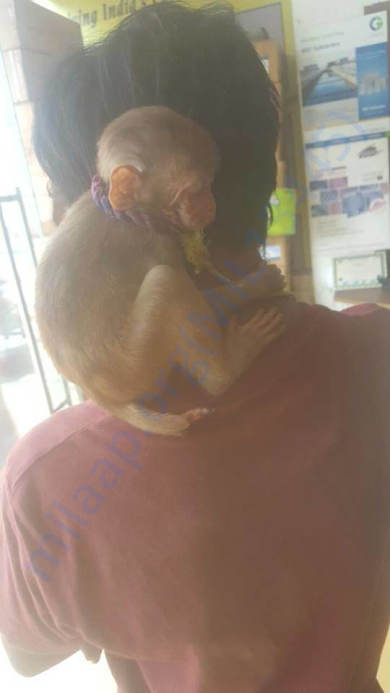 Minnie clinging on to PFA rescue team personnel