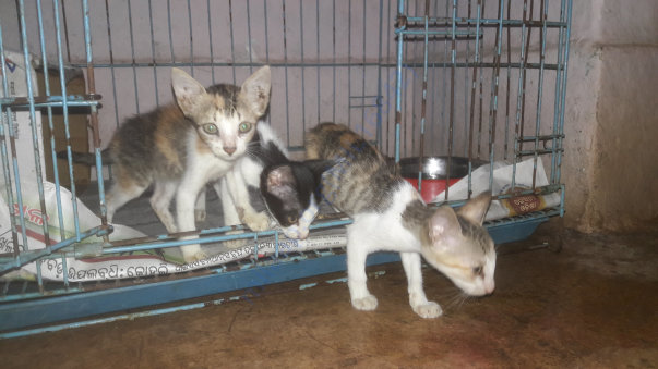 Orphan kittens under care