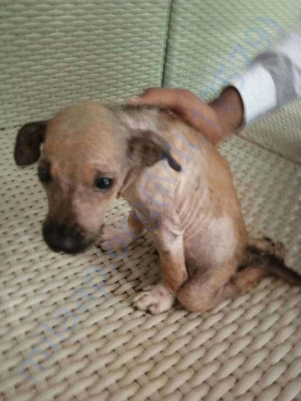 Talky Pic - Who suffered motorcycle accident and suffering from Mange