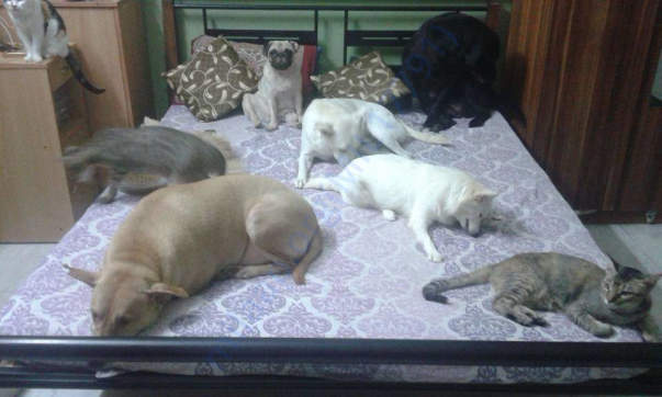 My babies Angel, Jackie, Winter, Snuggles, Buttons, Juliet,Kannu Kitty