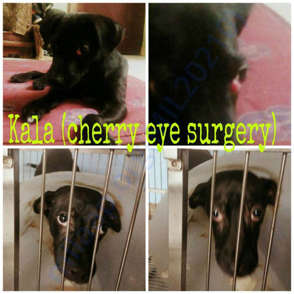 Kala before and after Eye Surgery