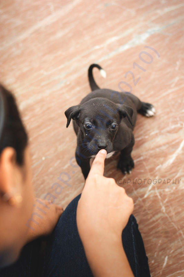 Brown Kutti Baby who has been boarded at heart2heart