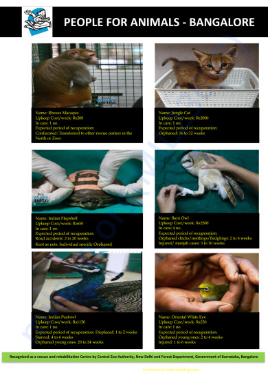 List of Urban Wild Animals for passive adoption