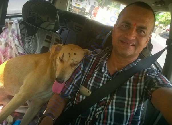 A dog after treatment - cured by Sujeet Choudhary -beaten up by owner.