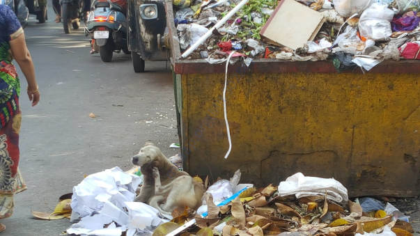 Injured dog picked up from garbage bin