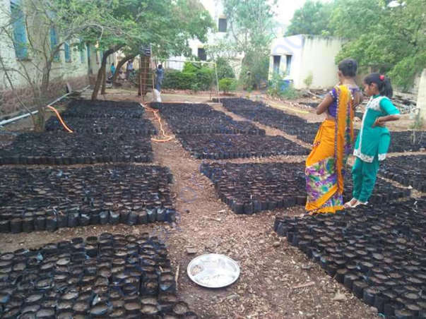 Nursery for 8000 tree plantation