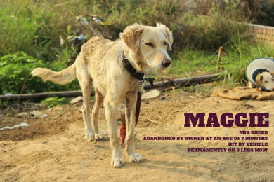 MAGGIE- ABANDONED BY OWNER! RUN OVER BY SPEEDING CAR !
