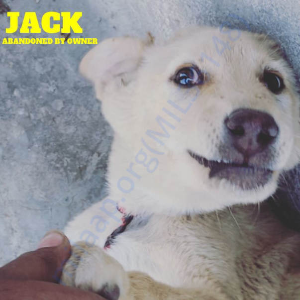 JACK- I'M DESI AND DON'T DARE TO ABANDON ME FOR THIS!