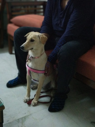 Our rescued girl Pari was adopted by a loving family in lajpat nagar