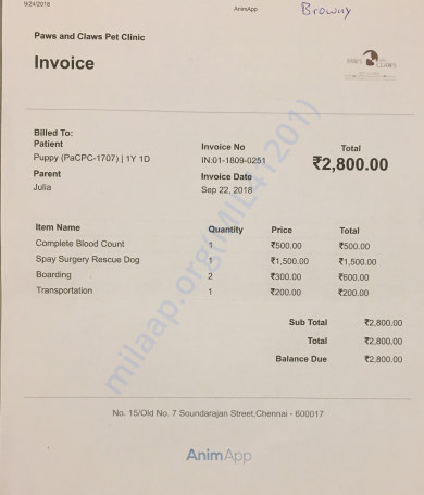 Invoice spaying surgery Browny