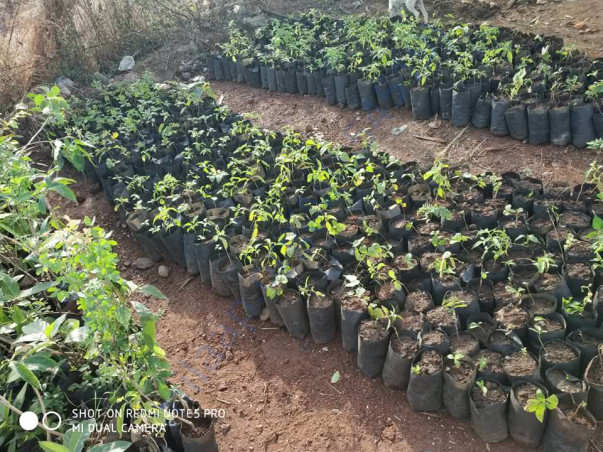 Saplings to be planted in upcoming days