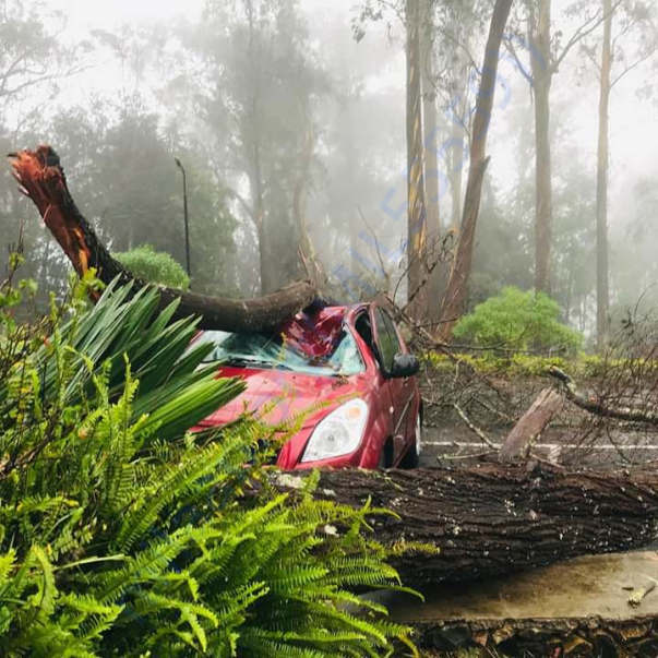 A car which was destroyed and laid to death of 1 by Gaja cyclone