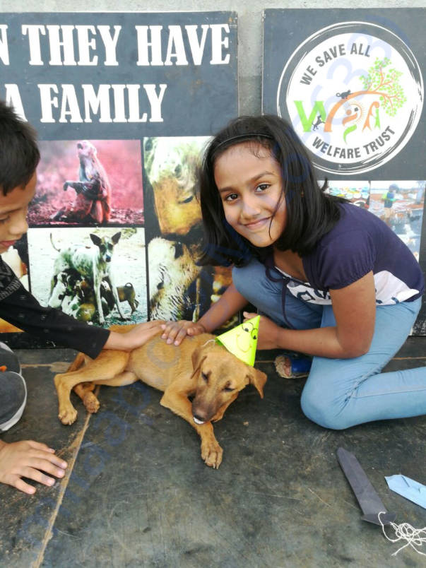 Adoption drive at WSA shelter