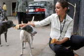 How Anjali Quit Her Job and Took 100 Dogs Under Her Wing