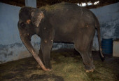 Crowdfunding To Help Rescued Elephant Lakshmi Reach Her Forever Home