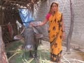 Lakshmibai Shettappa Bangennavar