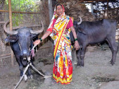 Honnavva Krishnappa Mang