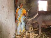 Mahadevi Shivaling Hulloli