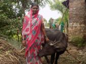Balavva Kumar Maishale