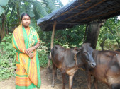 Champa Ankur