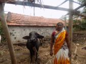 Gayitri Chikkappa Shinde