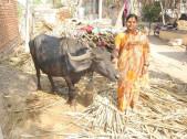 Surekha Dasharath Kurne