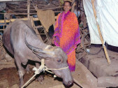 Chitra Ramachandra Kurade