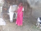 Kamalabayi Laxman Halakal