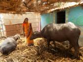 Shobha Parasappa Madar