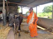Rekha Sanju Chaluvadi