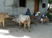 Shrimati Palai