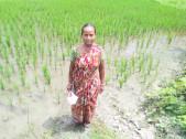 Jayhari Karjee