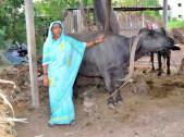 Bagubayi Babu Kamble