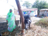 Taravva Yallappa Hanamappagol