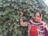 Sangeeta Devi