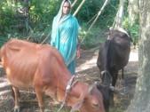 Gitanjali Behera