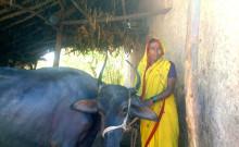 Suvarna Harishchandra Mang