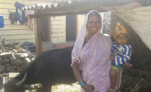 Minakshi and her buffalo