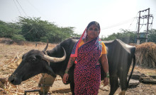 Gouravva with her buffalo