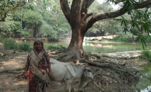 Taslima with her one year old cow!
