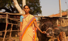 Sujata along with her buffalo