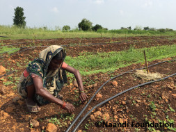 Help bring sustainable incomes to the farmers of Vidarbha