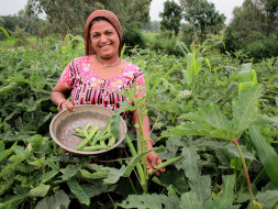 Help farmers earn better yields and sustain their farming businesses