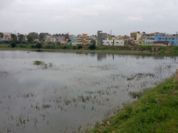 Bengaluru Marathon: Devasandra Lake Rejuvenation, K.R.Puram
