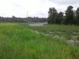 Kerekoppa Lake revival program