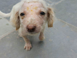 Help PFA save more animals!