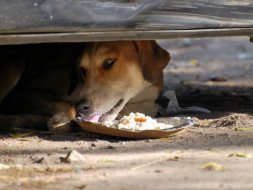 Need your support to feed stray dogs in my locality