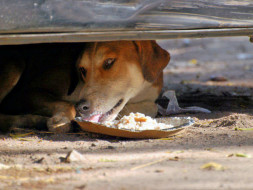 Feed 100 stray dogs in Indiranagar, Bangalore